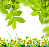 Fresh green leaves with wild flowers. Fresh green leaves frame with wild flower Stock Images