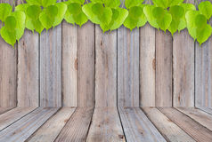 Fresh green leaves and wood floor on the old wooden background. Stock Image