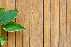 Fresh green leaves on the wooden floor background Stock Photography