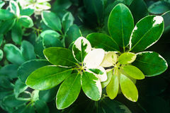 Fresh green leaves, young shoots of leaves Stock Photography