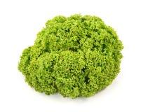 Fresh green lettuc Royalty Free Stock Photos