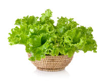 Fresh green lettuce in the basket isolated on  white background Royalty Free Stock Photos