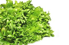 Fresh green lettuce frillice salad Royalty Free Stock Images