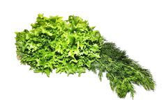 Fresh green lettuce frillice salad and dill Stock Image