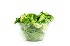 Fresh green lettuce in glass bowl Royalty Free Stock Photography