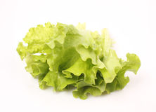 Fresh green lettuce Royalty Free Stock Image