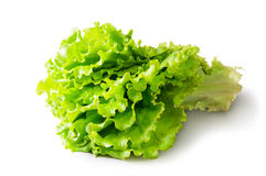 Fresh Green Lettuce Royalty Free Stock Images