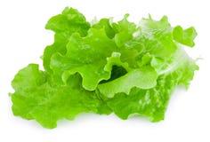 Fresh green lettuce isolated on white background Stock Photos