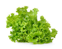 Fresh green lettuce isolated on  white background Royalty Free Stock Image