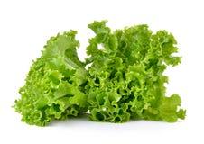 Fresh green lettuce isolated on  white background Royalty Free Stock Photo