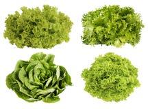 Fresh green lettuce isolated on white background. Stock Photos