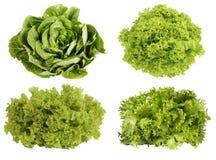 Fresh green lettuce isolated on white background. Stock Photography