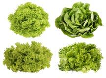 Fresh green lettuce isolated on white background. Royalty Free Stock Photo