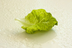 Fresh green lettuce leaf Royalty Free Stock Photo