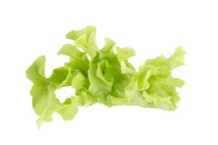 Fresh Green lettuce leaf salad ingredient royalty free stock photo