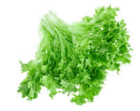 Fresh green lettuce leafs Royalty Free Stock Image