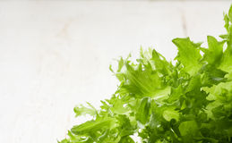 Fresh green lettuce leafs Stock Image