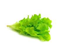 Fresh green lettuce leaves stock photo