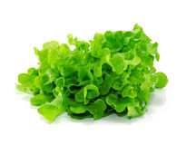 Fresh green lettuce leaves isolated on white Stock Photos