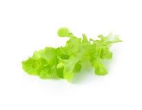 Fresh green lettuce leaves Stock Photography