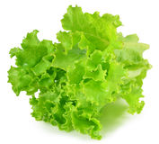 Fresh green lettuce leaves isolated on white Royalty Free Stock Photo