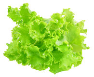 Fresh green lettuce leaves isolated on white Royalty Free Stock Image