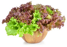Fresh green lettuce leaves isolated on white Royalty Free Stock Photos