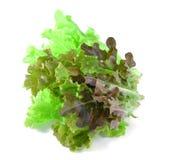 Fresh green lettuce leaves  on white Royalty Free Stock Image