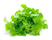 Fresh green lettuce leaves  on white Royalty Free Stock Photography