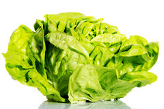 Fresh, green lettuce over white. Stock Photography