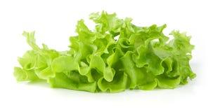 Fresh green Lettuce salad Stock Image