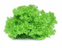 Fresh green lettuce salad. Isolate on white background Stock Images