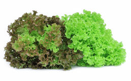 Fresh green lettuce salad. Isolate on white background Stock Photography