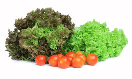 Fresh green lettuce salad Stock Image
