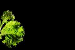 Fresh green lettuce salad fragment on black background Stock Photo