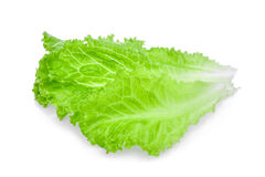 Fresh green lettuce salad leaves isolated on white Royalty Free Stock Image