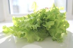 Fresh green lettuce salad leaves on white background. Horizontal photo royalty free stock photos