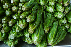 Fresh green lettuce Stock Photo