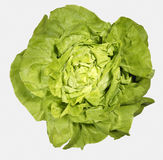 FRESH GREEN LETTUCE WITH WATER DROPS ON LEAVES. ON WHITE BACKGROUND Stock Image