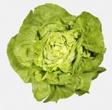 FRESH GREEN LETTUCE WITH WATER DROPS ON LEAVES. ISOLATED ON WHITE BACKGROUND Royalty Free Stock Image
