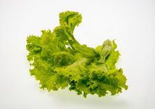 Fresh green lettuce Stock Photos