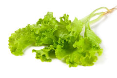 Fresh and green lettuce Stock Photo