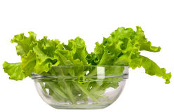 Fresh and green lettuce Stock Photography