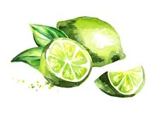 Fresh green lime isolated on white background. Watercolor hand drawn illustration vector illustration