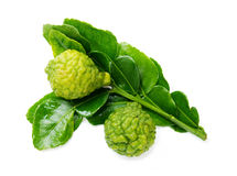 Fresh green lime. Kafir Stock Photo