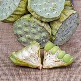 Fresh green lotus seed (lotus nut) Royalty Free Stock Image
