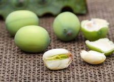 Fresh green lotus seed (lotus nut) Stock Photography