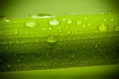 Fresh green macro Stock Photo