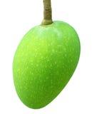 Fresh green mango Royalty Free Stock Photo