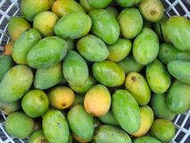 Fresh Green Mangoes. Small oval fruits with yellow pulp Royalty Free Stock Photography